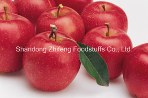 2015 New Fruit Fresh Gala Apple pictures & photos