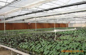Professional Cooling Pad Exhaust Fan Greenhouse Cooling System pictures & photos