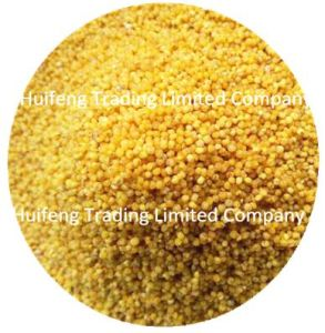 Shanxi Origin Yellow Millet for Selling