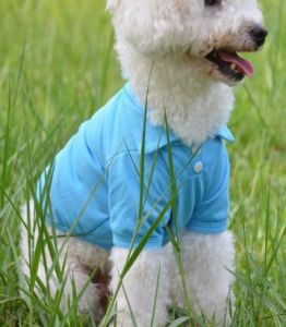 Polo Sweater Dog Clothing, Pet Product pictures & photos