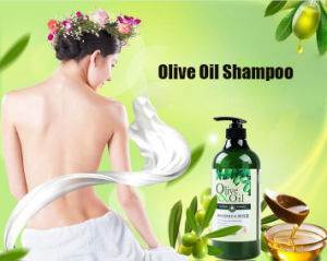 OEM Private Label Hot Sale Olive Oil Hair Shampoo