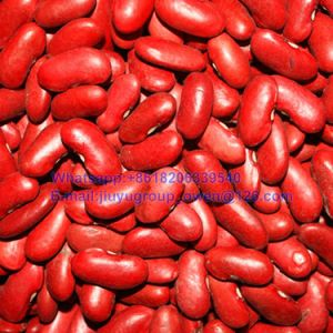 Food Grade Red Kidney Bean