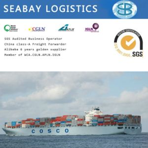 Shipping Company/Shipping Agent/Shipping Forwarder From