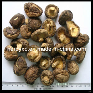 Dried Shiitake Mushroom Whole