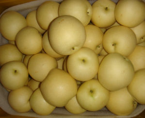 Fresh Golden Pear/Sweet Yellow Pear pictures & photos