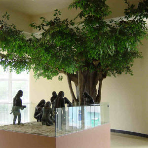 Outdoor Artificial Banyan Trees pictures & photos