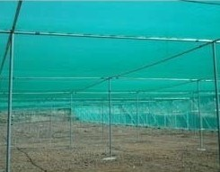 Wholesale PE Transparent Agriculture Anti Insect Bird Net for Plants Cover pictures & photos