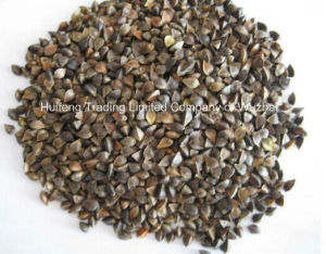 Shanxi Origin Buckwheat for Sale