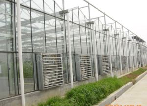 Long Life Cheap Price Span Glass Multi-Span Greenhouse