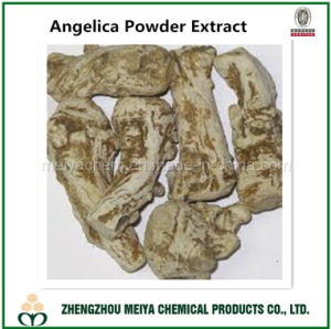 Best Angelica Powder Extract with Ligustilide 1% HPLC pictures & photos