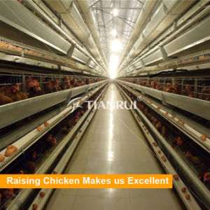 Automatic H Type Multi-tier Battery Cages for Layers in Indonesia pictures & photos