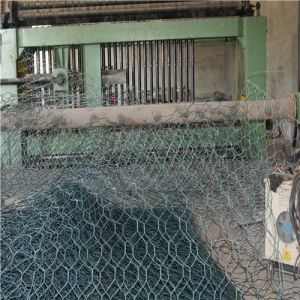 Hexagonal Wire Netting/Hexagonal Wire Mesh