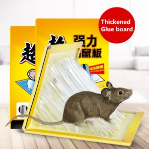 China Rat Mouse Glue Trap, Rat Mouse Glue Trap Wholesale