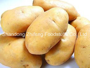 High Quality New Fresh Potato pictures & photos