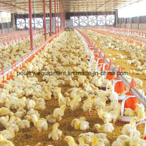 China Poultry Farm Equipment, Poultry Farm Equipment