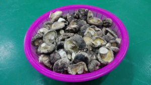Dried Smooth Shiitake Mushroom 3kg Bag pictures & photos