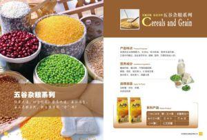 Cereals and Grain Series (13073107)