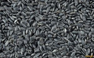Black Oil Sunflower Seeds 562