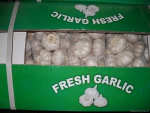 2016 Crop Fresh Garlic pictures & photos