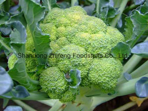 2017 New Crop Broccoli with High Quality pictures & photos