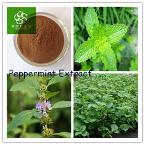 100% Natrual Plant Peppermint Extract, Peppermint Leaf Extract, Peppermint  Extract Powder, Bulk Peppermint Extract, Peppermint Dry Extract, Herb
