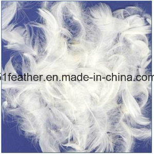 Washed White Goose Feather (2-4cm 4-6cm) for Bedding Lines and Furniture (GB/T17685-2016) pictures & photos