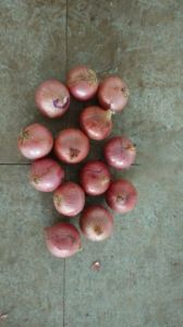 2015 Fresh & Cheap Red Onions
