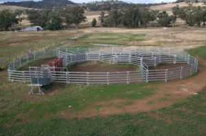 Nice-Looking Galvanized Cattle Panel Good Sale in The Market Xm-04 pictures & photos