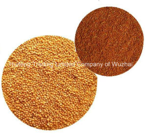 Millet in Husk for Exporting