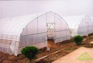 Single Tunnel Greenhouse/ Vegetable Greenhouse/ Cheapest Greenhouse
