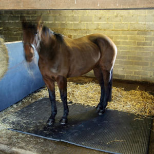 Rubber Horse Mat, Cheap Horse Stall Mats for Sale pictures & photos