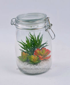 Home Decoration Artificial Succulent Plants in Glass Bottle