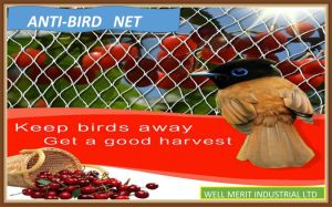Anti-Bird Net for Agricultural Net pictures & photos