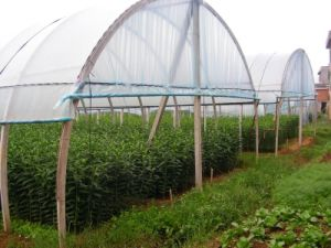 5.5 M Width UV Stabilized 50 Mesh Greenhouse Anti Insect Net pictures & photos