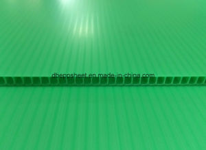 Polypropylene Corrugated Board pictures & photos