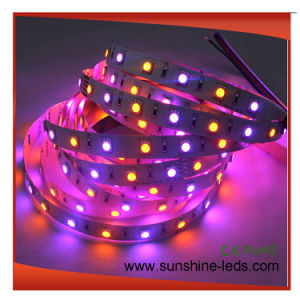 SMD5050 RGBA LED Strip Lamp pictures & photos