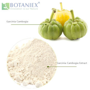 China D Natural Garcinia Cambogia Extract Powder Hydroxycitric