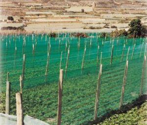 screening natural waitrose reed garden plcid trellis bamboo creations tools set corner products