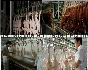 Poultry Farm Machine -Slaughter equipment Line pictures & photos