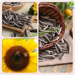 2016 Sunflower Seeds Is Hot Sale Around The World