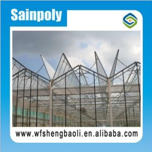 Good Sale PE Sheet Greenhouse with Ventilation Top Window pictures & photos