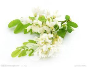 Factory Supply Sophora Japonica L. Extract Quercetin pictures & photos