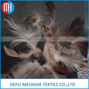 100%2-4 Cm Grey Goose Feather for Sofa and Pillow Filling pictures & photos