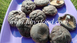 Top Quality Wholesale Dried Smooth Shiitake Mushroom pictures & photos