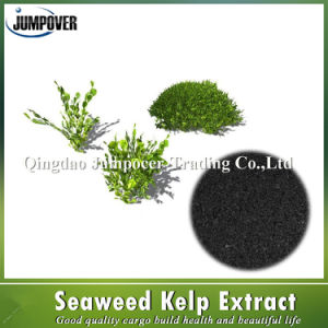 Black Organic Fertilizer Seaweed Extract