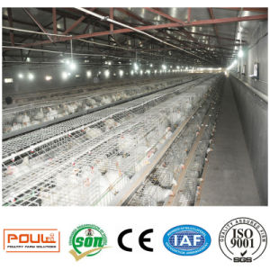 Poultry Farm Equipment / Broiler Chicken Cages System pictures & photos