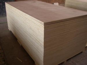 Plastic Birch Plywood with High Quality pictures & photos