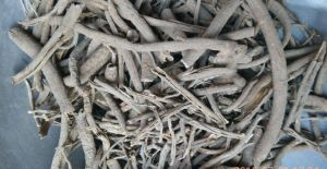 Eleuthero Root pictures & photos