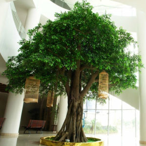 Cheap Large Fake Golden Live Artificial Ficus Tree Artificial Banyan Tree pictures & photos