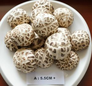 China White Flower Mushroom Dried Vegetable China Dried Green Food